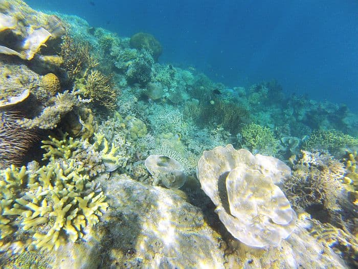 team-building-asia-island-hopping-philippines-snorkeling-GOPR0285