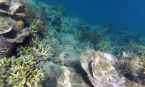 island-hopping-rural-philippines-GOPR0285