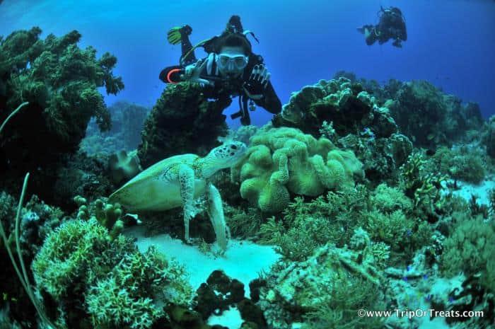 Tubbataha-Reef