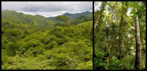 biodiversity-of-nature