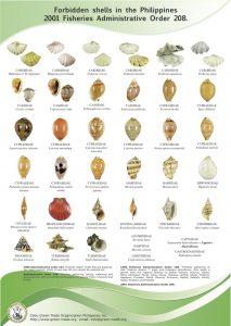 illegal-seashells-philippines