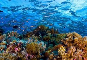 Tubbataha-Reef-National-Marine-Park
