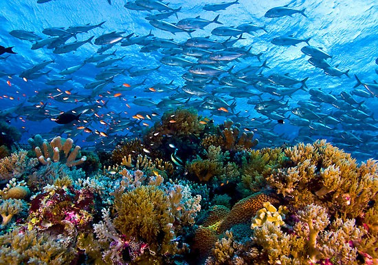 Tubbataha-Reef-National-Marine-Park