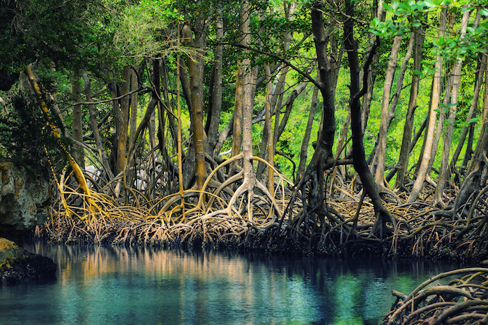 mangroves-island-hopping-philippines