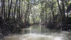 puerto-princesa-mangrove-070220152328