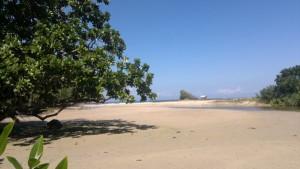 puerto-princesa-mangrove-070220152333