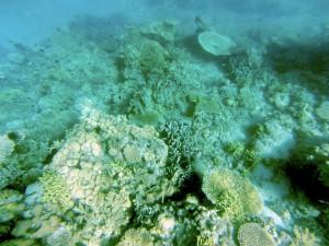 island-hopping-philippines-corals-GOPR0336