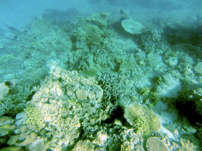 island-hopping-philippines-corals-GOPR0336