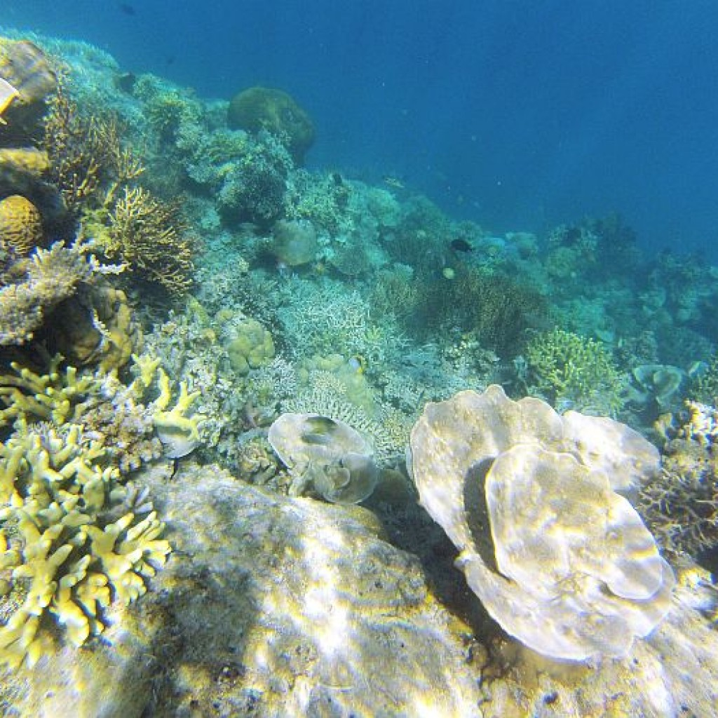 island-hopping-philippines-snorkeling-GOPR0285
