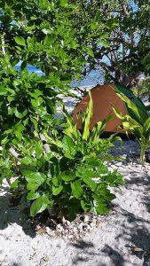 tent-camping-spot-A-20170228_090351