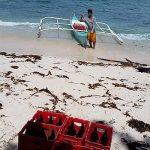 Boat Operator – Alvin