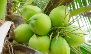 coconuts-detox-retreat