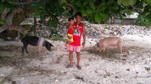 rent-a-hut-alvin-pigs