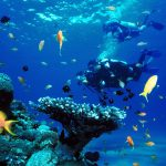 Diving Reefs and Wrecks in Coron, Palawan