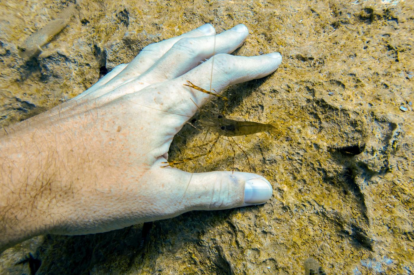 Diving Reefs and Wrecks in Coron, Palawan