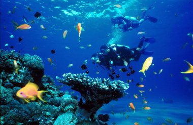 scuba-diving-coron-boat-tours