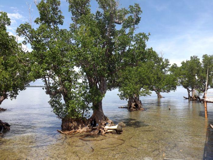 Iloilo-City-Bacolod--Mangrove-Eco-park-Suyac Island-11
