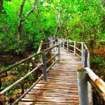 Travel Tour Packages to Suyac Island Mangrove Eco-park