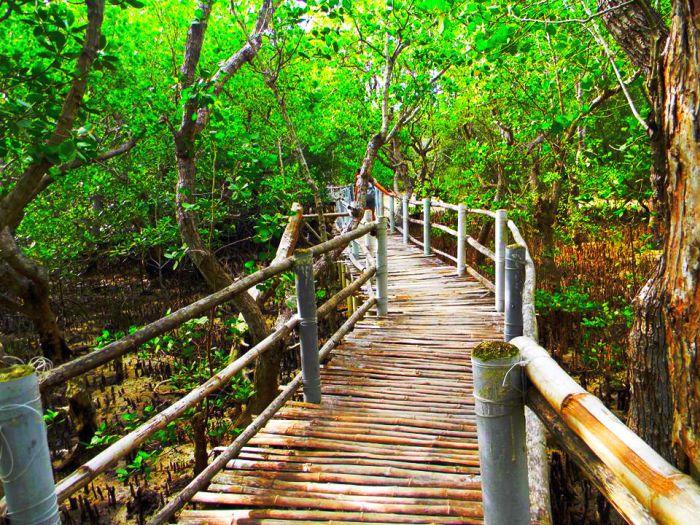 Iloilo-City-Bacolod--Mangrove-Eco-park-Suyac Island-4