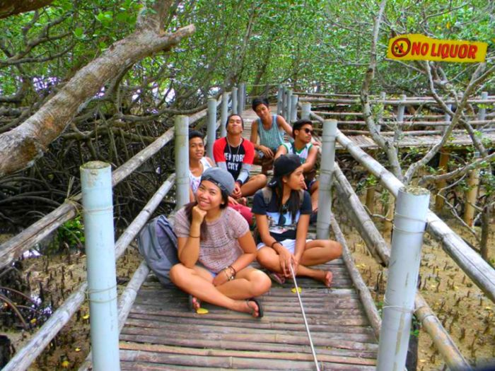 Iloilo-City-Bacolod--Mangrove-Eco-park-Suyac Island