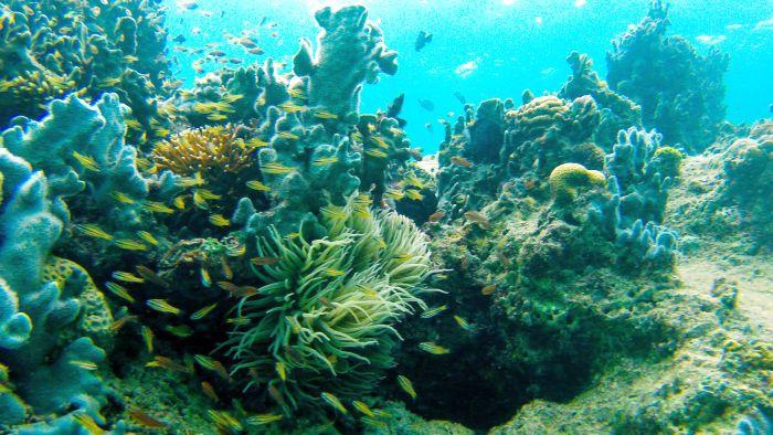 Iloilo-City-Bacolod-Sagay-Marine-Reserve-carbin-reef-corals-3