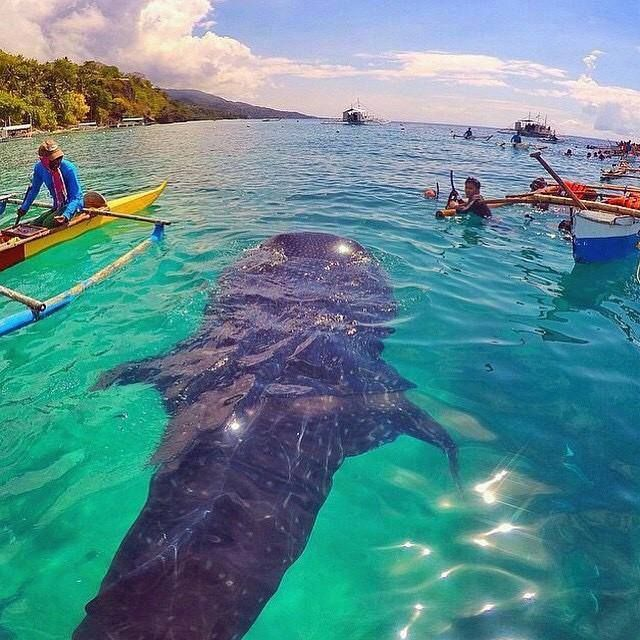 Iloilo-City-Bacolod-Sagay-Marine-Reserve-carbin-reef-whale-2