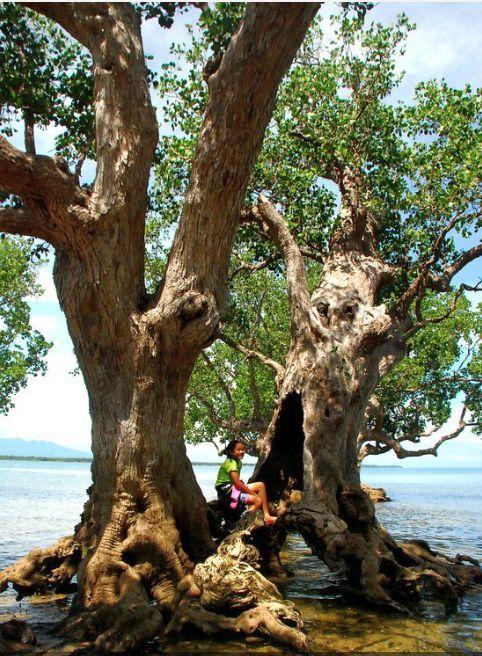 Suyac-Island-Mangrove-Eco-park