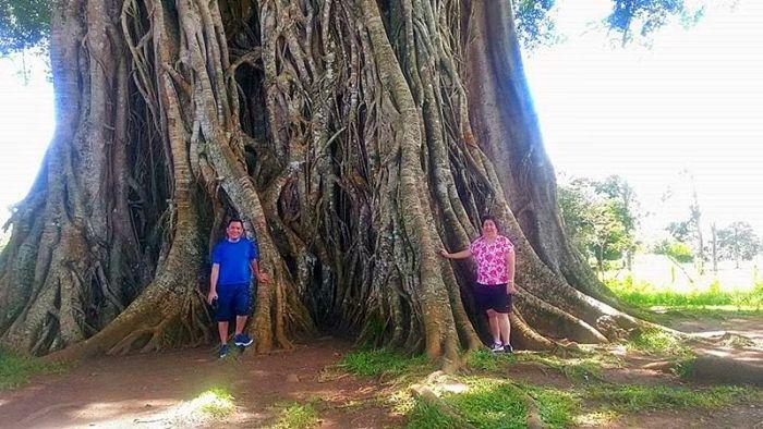 iloilo-city-to-bacolod-mambukal-resort-waterfalls-balete-tree