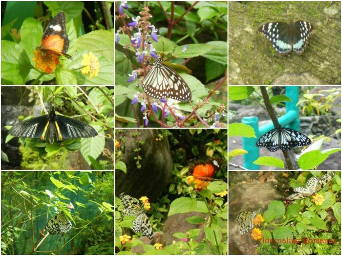 iloilo-city-to-bacolod-mambukal-resort-waterfalls-butterfly-garden-3
