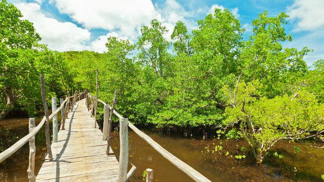mangrove-forest-visayas