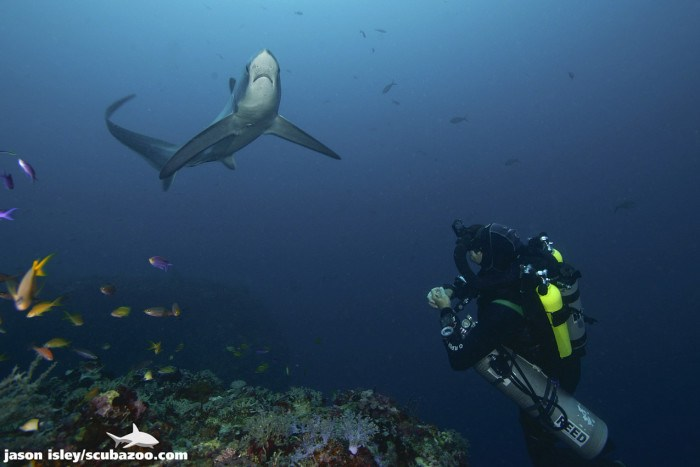 Scuba diving with thresher sharks in Malapascua, Cebu - Things You Need to Know